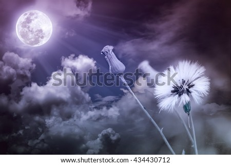 Attractive photo of flowers with full moon and moonlight in nightly sky. Beautiful nature use as a great background. Vintage tone. The moon taken with my own camera, no NASA images used. - stock photo