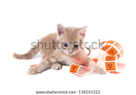 "Auburn month kitten playing with a tape labeled ""Biohazard"" on a white background"