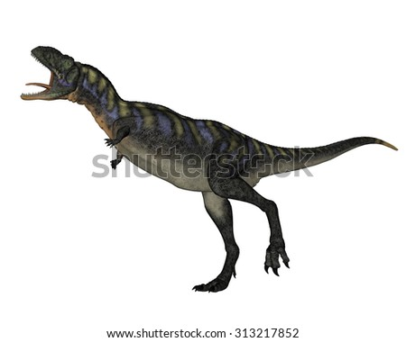 Aucasaurus dinosaur walking roaring isolated in white background - 3D render