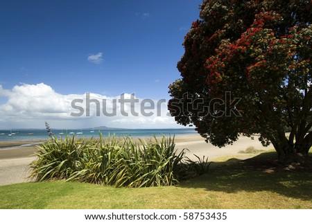 Auckland North Shore Beach with Pohutukawa tree. - stock photo