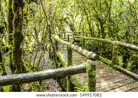 Aug Ka nature trail walkway in the Forrest Chiang mai Thailand   - stock photo