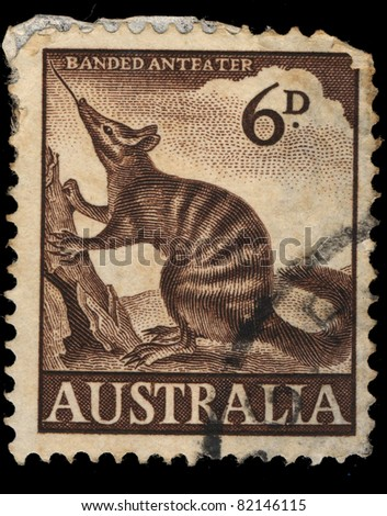 AUSTRALIA - CIRCA 1960: A stamp printed in Australia shows Banded Anteater, circa 1960 - stock photo