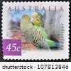 AUSTRALIA - CIRCA 2001: A stamp printed in Australia shows image of a budgerigar (Melopsittacus undulatus), circa 2001 - stock photo