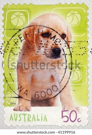 AUSTRALIA - CIRCA 2004: A stamp printed in Australia shows image of a labrador pup, series, circa 2004 - stock photo