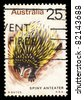 AUSTRALIA - CIRCA 1974: A stamp printed in Australia shows Spiny Anteater, circa 1974 - stock photo