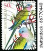 AUSTRALIA - CIRCA 2005: stamp printed by Australia, shows parrot, circa 2005 - stock photo