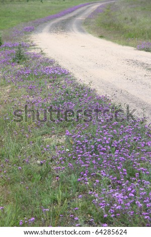 australia outback road lined with pattersons curse - stock photo