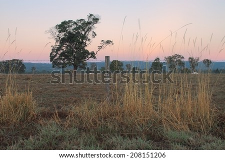 Australian farm paddock background with tree feature - stock photo