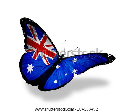 Australian flag butterfly flying, isolated on white background - stock photo