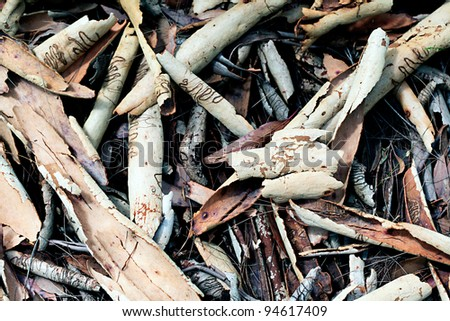 Australian scribbly gum bark litter background - stock photo