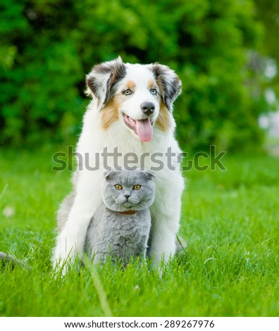 Australian shepherd puppy and cat sitting together on the green grass - stock photo