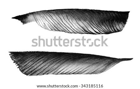 author's schedule illustration - feathers as a symbol of romantic literature