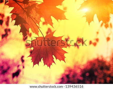 Autmn leafs on the sky background - stock photo
