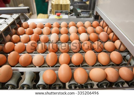 Automated sorting of raw and fresh chicken eggs in a packing facility. Agribusiness, food production, organic farming, customer support and trade concept. 
