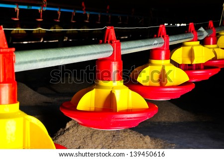 Automatic feeding trough on a integrated poultry farm in Thailand - stock photo