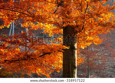 Autrumn backlit tree - stock photo