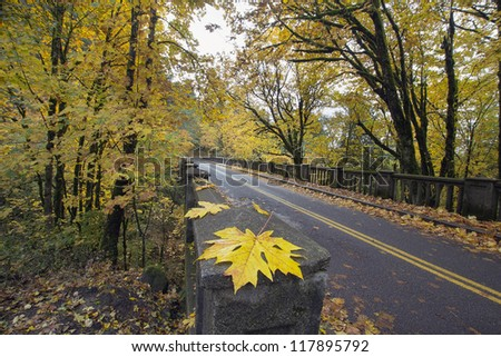 Autumn Along Historic Columbia Highway Bridge Lined with Giant Maple Trees