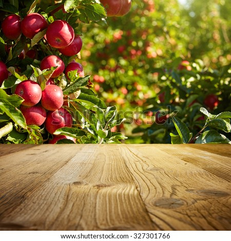 autumn apple orchard background  - stock photo