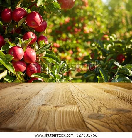 autumn apple orchard background  - stock photo