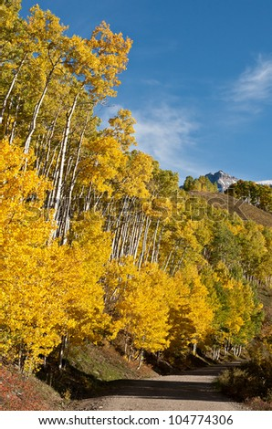 Autumn aspens along county road #7 near Ouray, Colorado - stock photo
