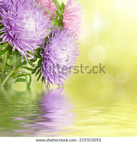 Autumn aster flowers boquet on the colorful golden bokeh background - stock photo