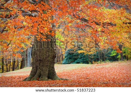 Autumn at Connecticut - stock photo