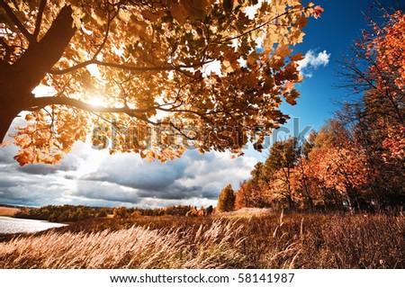Autumn at the morning park - stock photo