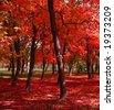 Autumn at the park - stock photo
