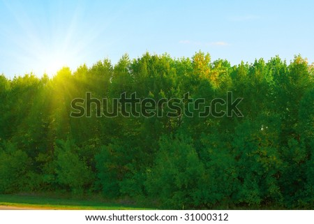 Autumn at the park. Green trees with the foliage, beginning to turn yellow