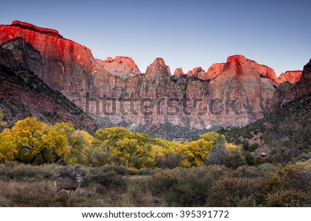 Autumn at the Towers of the Virgin - Zion National Park - stock photo