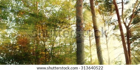 autumn atmosphere in the forest - stock photo