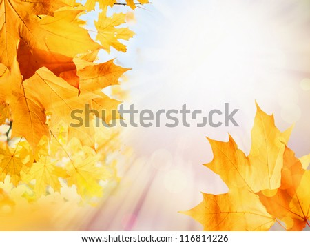 Autumn background, abstract nature pattern