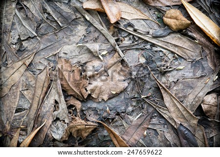 autumn background,dried autumn leaves - stock photo