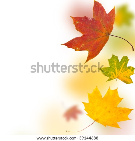 Autumn background from leaves of different colour and forms - stock photo