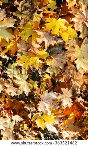 autumn background from maple leaves - stock photo