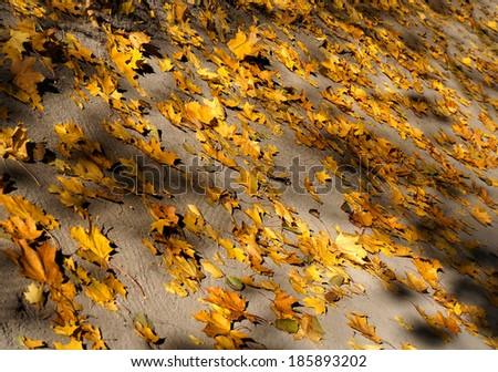 Autumn background from the fallen colorful leaves           - stock photo