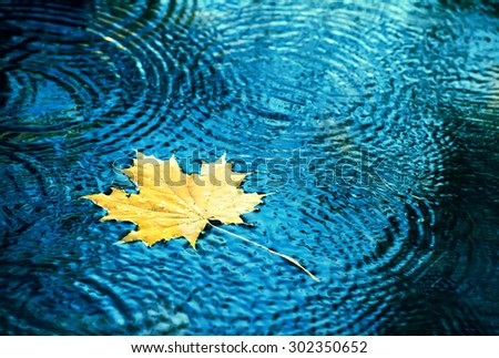 Autumn background, leaves drops in the water. - stock photo