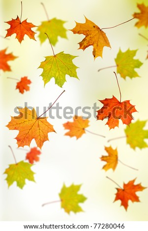 Autumn background - maple leafs falling down - stock photo
