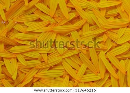 autumn background of yellow flower petals of artichoke - stock photo