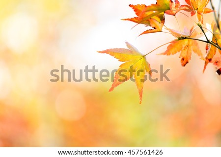autumn background Red leave with free copyspace - stock photo