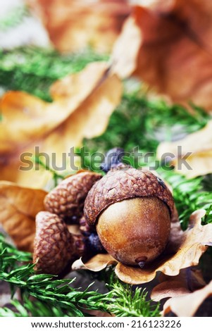 autumn background with acorns and oak leaves - stock photo