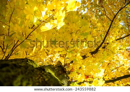autumn background with colored leaves on wooden board - stock photo