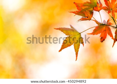 autumn background with free copyspace - stock photo