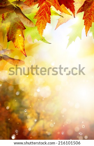 autumn background with yellow leaves of autumn  tree lit by the sun - stock photo