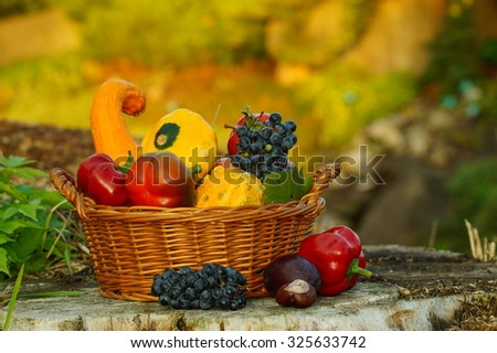 Autumn basket full of pumpkins other vegetables and fruits in the light of the setting sun - stock photo