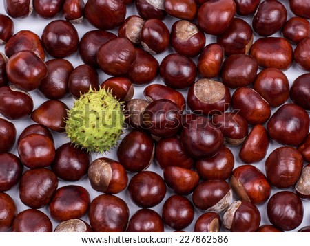 Autumn, beautiful fruits of chestnut. - stock photo