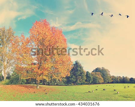 Autumn beautiful landscape with migrating birds ( canadian geese). Fall tone colors photo - stock photo
