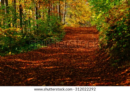 Autumn beech forest. Landscape with a beautiful road - stock photo