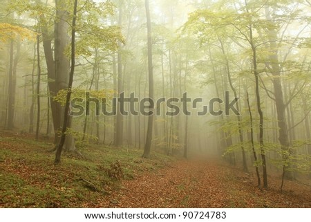Autumn beech forest surrounded by mountain mist. - stock photo