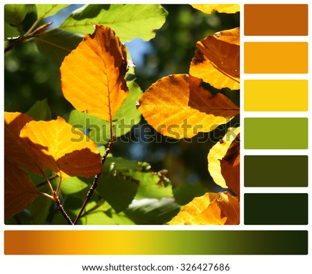 Autumn Beech Leaves. Palette With Complimentary Colour Swatches.